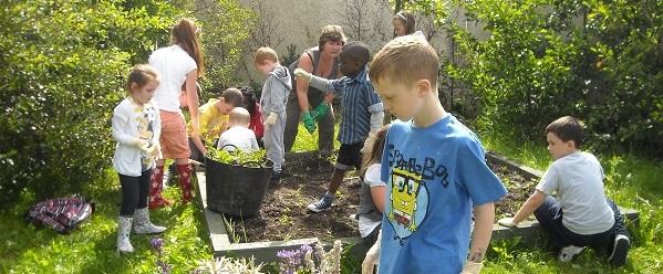 Newtown Court Community Gardens